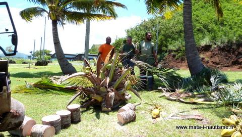 Découpe du cocotier