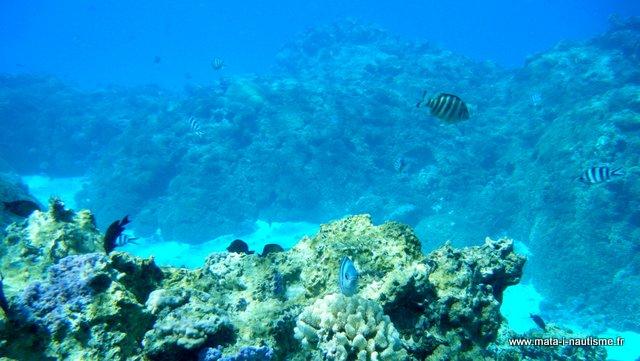 Récif de Nouvelle Calédonie