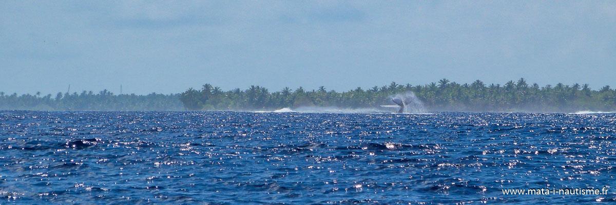 Une baleine en arrivant à Maupiti