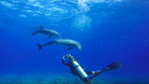 GEMM Polynésie Groupe d'étude des mammifères marins