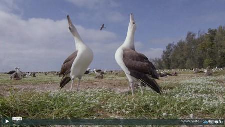 Albatross The film